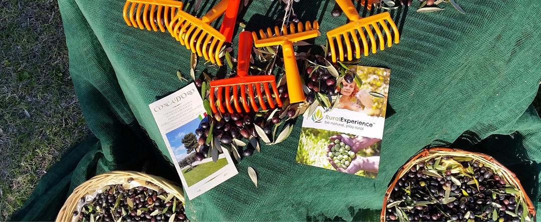 """""""Olive Experience: torna l'appuntamento con la Rural Experience nel Piceno"""""""